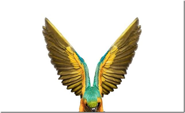 Pássaros-49