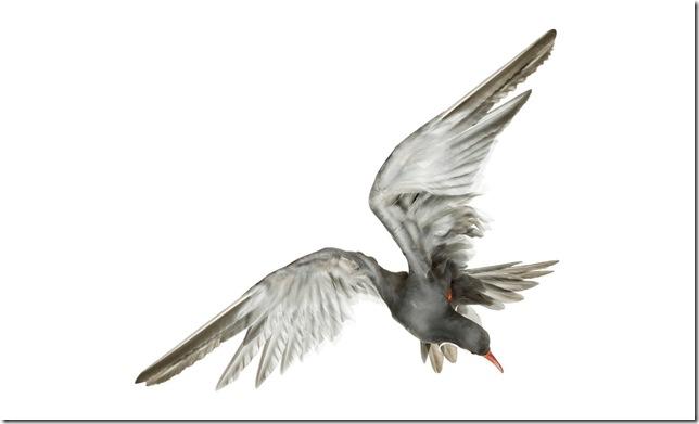 Pássaros-17