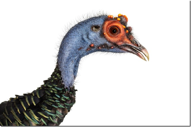 Pássaros-40