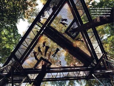 forest canopy at Morris Arboretum