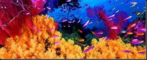recifes-de-coral-do-caribe