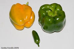 peppers chilli-6281