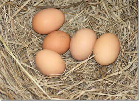 ninho de ovos
