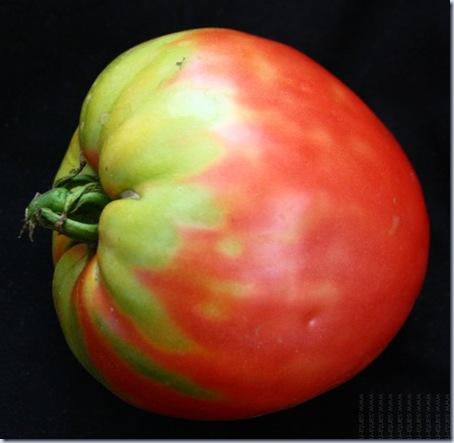 tomate coracao de boi sn