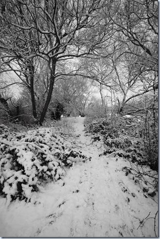 roding_snow3
