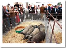 El presidente de Castilla-La Mancha, José María Barreda, asistió en Almodóvar del Campo a la apertura de las II Jornadas Culturales para la recuperación de la Feria de Ganado de Marzo.