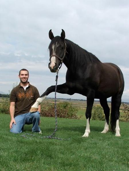 wyattandhorse