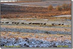 Bradgate  Park D300s  27-11-2010 14-38-25