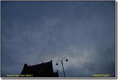 Aberystwyth D200  12-02-2011 16-59-46