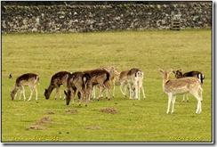 Bradgate Park D300s  27-03-2011 13-16-18