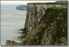Bempton Cliffs D2h  01-04-2011 12-36-22