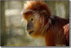 Twycross Zoo D200  01-05-2011 12-38-58