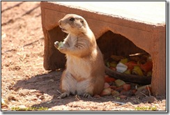 Twycross Zoo D50  01-05-2011 12-48-30