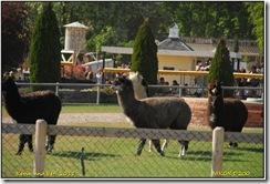 Twycross Zoo D200  01-05-2011 15-26-27