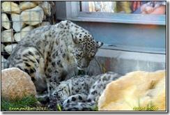 Twycross Zoo D300s X  01-05-2011 15-37-26