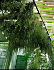 serre_du_museum_national_d'histoire_naturelle_paris_vegetal_ceiling_1.jpg