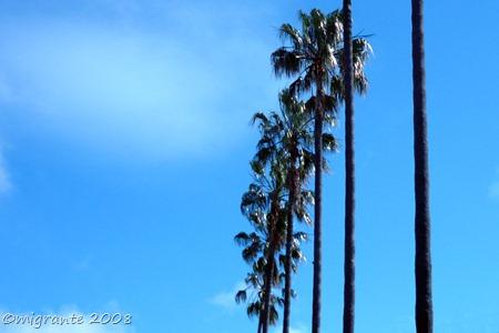 palmeras en formación