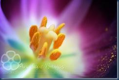 ___Flower______by_Liek