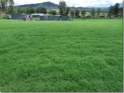 grass after rain near tamworth