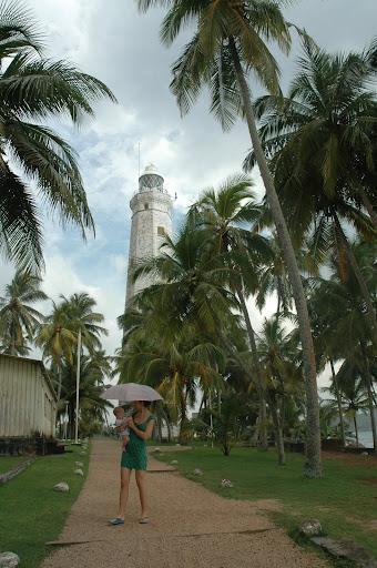 Међу палмама