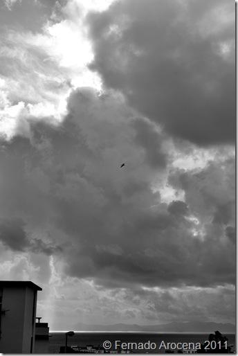 fernando arocena - tormenta 5