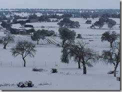 nieve feb 06 011