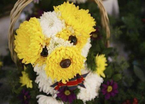 flower-dog-3