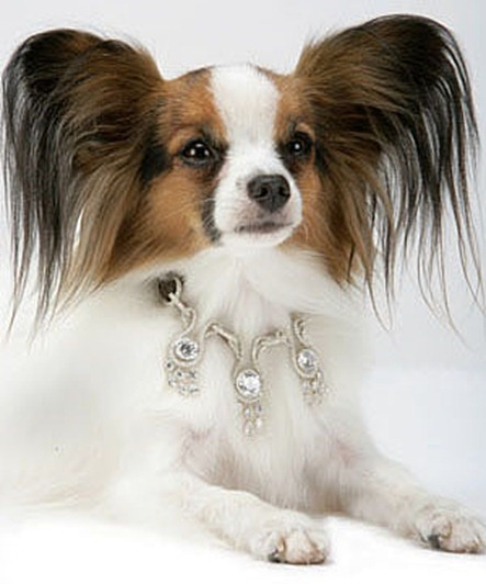 most-expensive-dog-collar