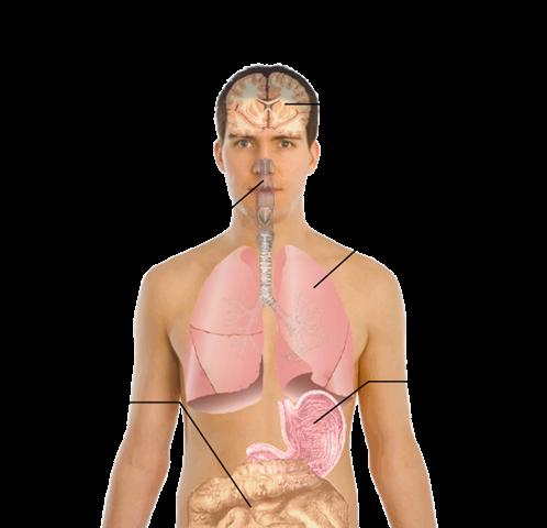[symptoms_of_swine_flu[7].png]