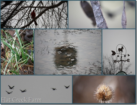 gray_january_days_collage
