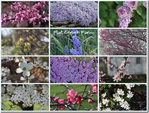 fragrant_spring