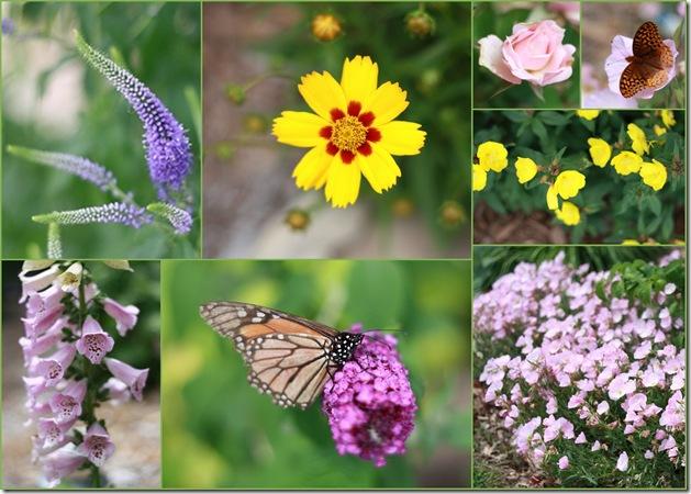 flowers&butterflies6--09