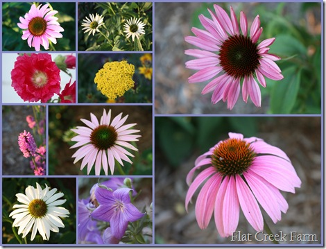 flower_collage_june