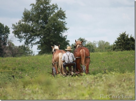 mowing_hay