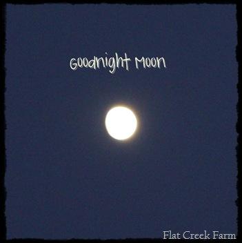 gnight_moon
