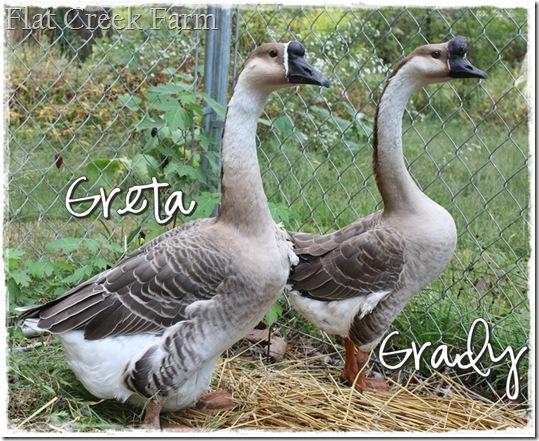 greta_grady1