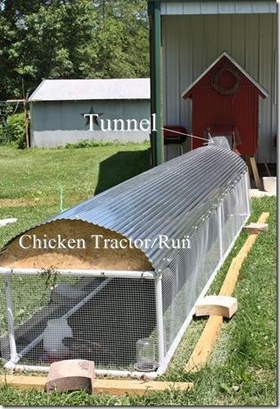 ChickenRun1