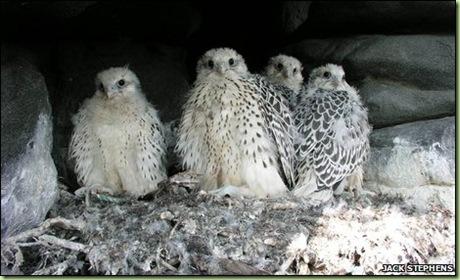 birdsinnestolder