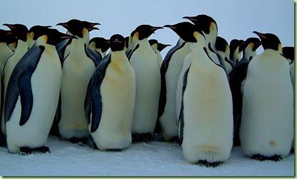 social_penguin11