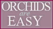 Orchids-Are-Easy