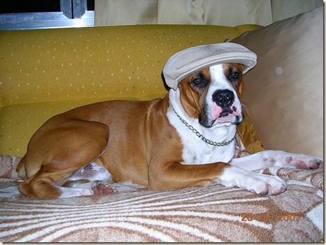 Adiestramiento-básico-de-un-perro-boxer17