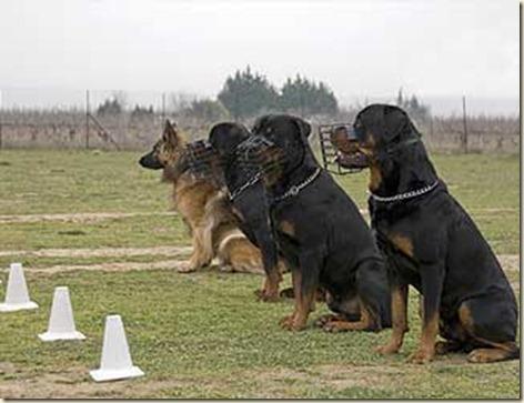 tecnicas-de-adiestramiento-canino5