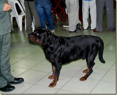 Expo_Canina67