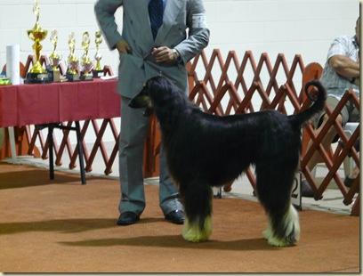 Expo_Canina143