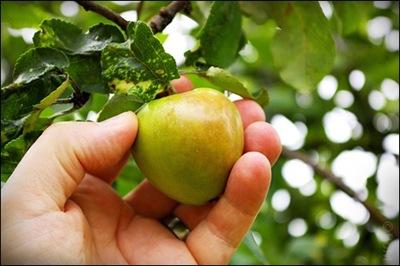 Äpple04