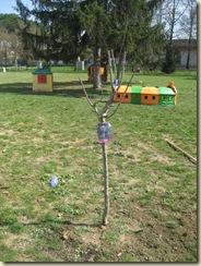 orto asilo-alberi 007