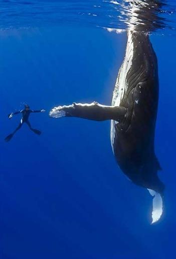 whale1_1465041i