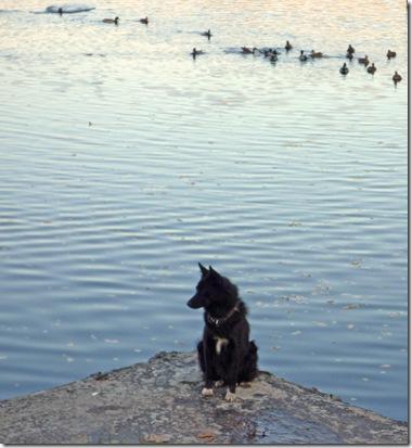 Одинокий пёс