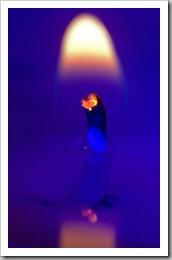 Egylángnyi kék (Óbuda, 2006)