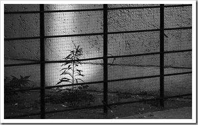 Előtted, vagy mögötted - Újpest, 2010. augusztus 27.